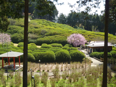 三室戸寺からの風景です。